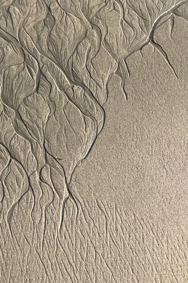 Abstract Patterns in the Intertidal Zone