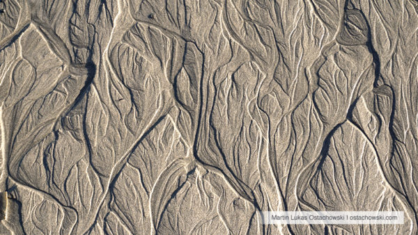 4 Abstract Patterns in the Intertidal Zone