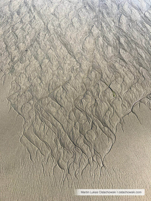 5 Abstract Patterns in the Intertidal Zone